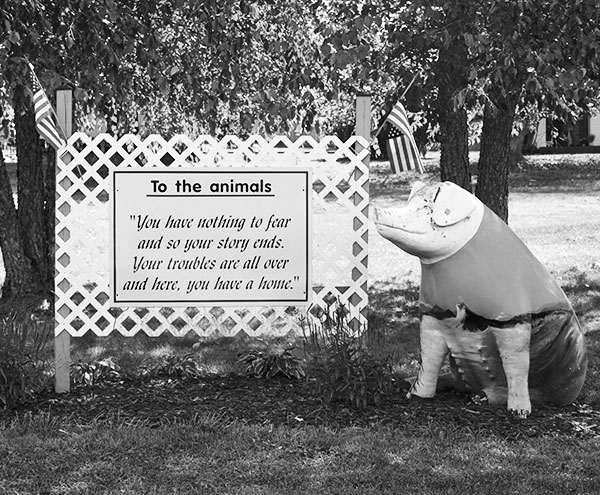 Pigs Sign BW