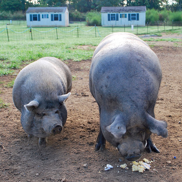 Resources - PIGS Animal Sanctuary